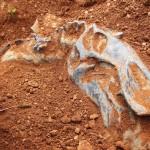 Звероящеры Пермского периода, река Вятка, аномальная зона Котельнич: череп