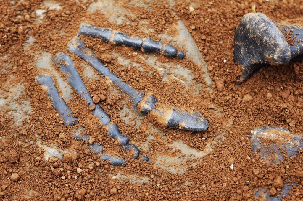 Звероящеры Пермского периода, река Вятка, аномальная зона Котельнич: лапа звероящера