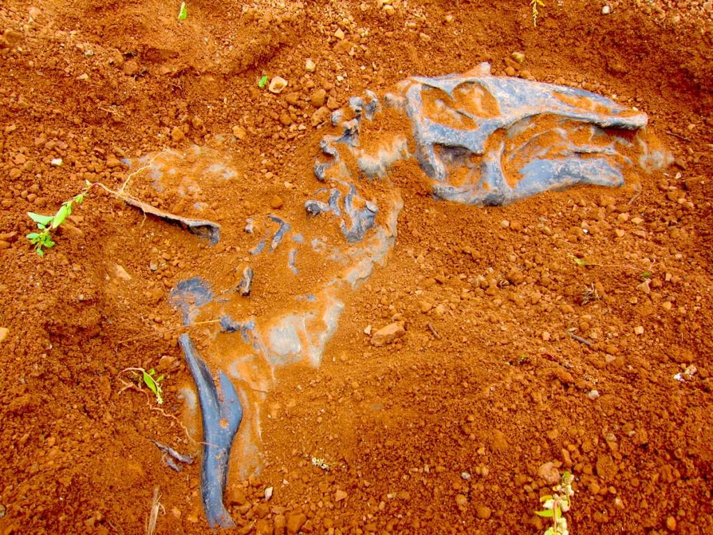 Звероящеры Пермского периода, река Вятка, аномальная зона Котельнич: портрет ящера